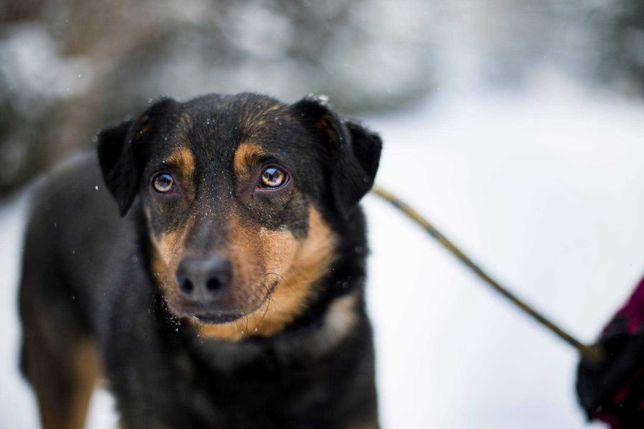 Tobi to wspaniały psiak, który czeka na lepsze życie. Pokochaj go!