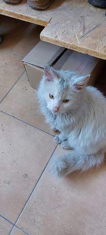 Znaleziono kota, jest zaniedbany ma wszoły i pchły