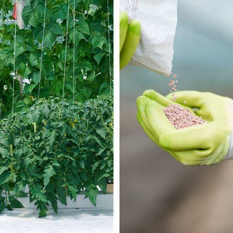 Hidroponia - Nutrientes Fase Vegetativa - Loja Oficial