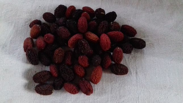 Suszony owoc derenia