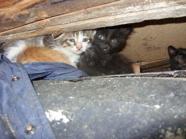 Срочно помогите бездомным котятам!