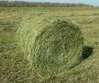 Продаем сено полевое и луговое недорого.в тюках по 20 кг.