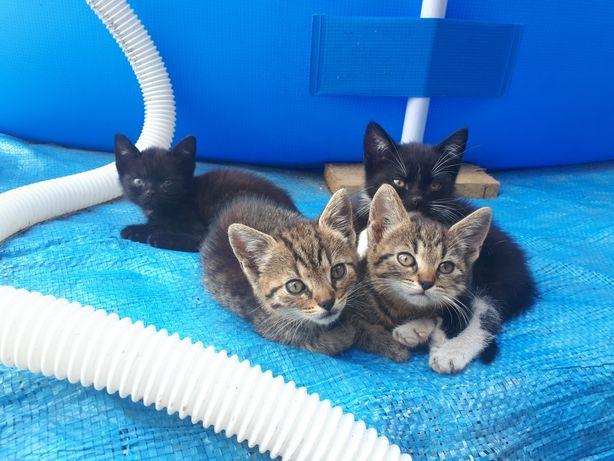 Do oddania 3 małe kotki