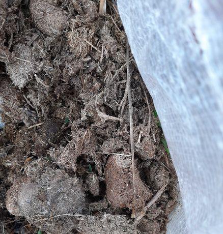 Estrume de cavalo/adubo natural e orgânico