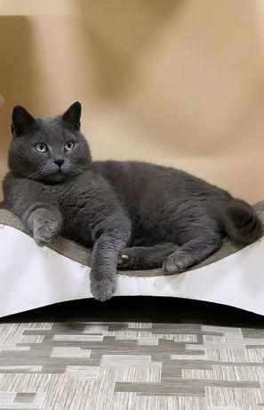 Кот котик