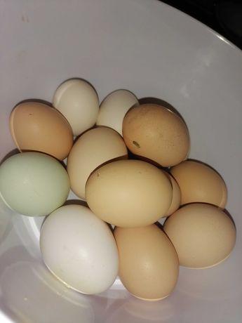 Swojskie jajka od kur
