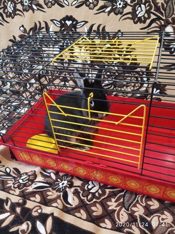 Карликовый кролик с клеткой+подарок