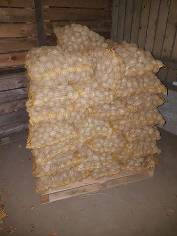 Ziemniaki wielkości Sadzeniaka Denar Owacja Jelly Tajfun Bellaroza