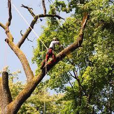 Спил аварійних дерев бориспіль