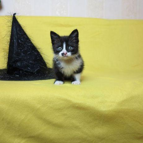 котенок-фамильяр ищет хозяина