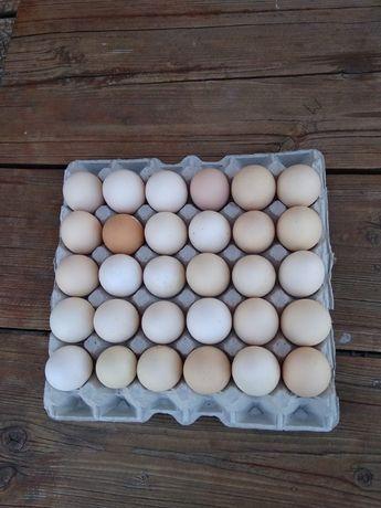 Sprzedam jajka lękowe od kur z własnego chowu duże