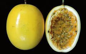 plantas maracuja amarelo doce