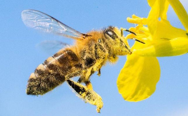 Продам пчел, нахожусь в  Черноморске