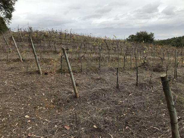 Terreno agricola de vinha