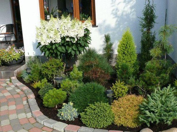 Оформление хвойных композиций в саду