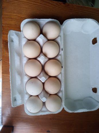 Jajka wiejskie zapraszam