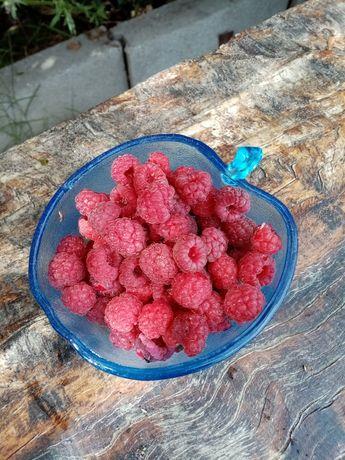 Framboesas biológica, fruta fresca