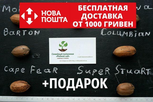 Пекан семена 10 штук орех кария для саженцев(вкуснее грецкого) насіння
