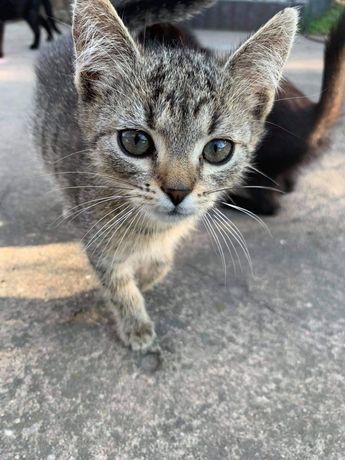 Oddam w dobre ręce młode kotki
