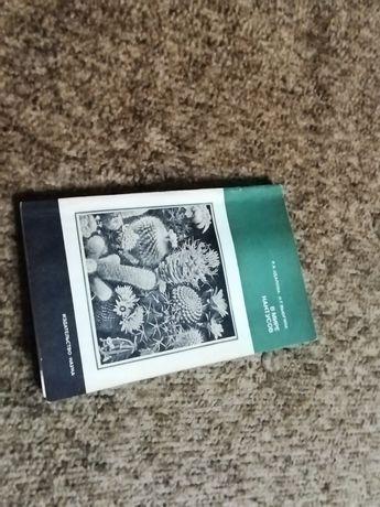 """Книга """"В мире кактусов"""""""