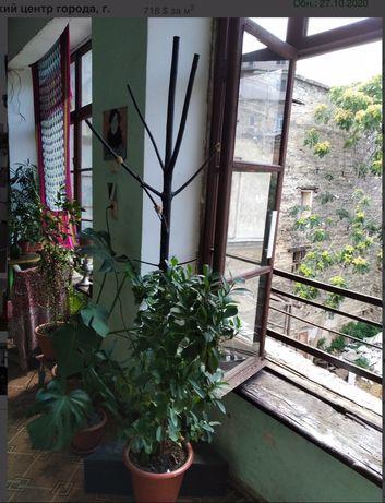 Квартира на Дерибасовской. Балкон с видом в сторону Одесского залива.