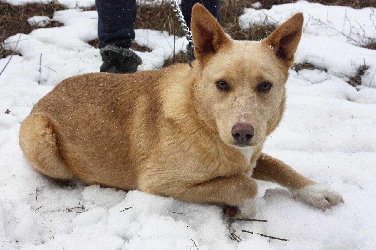 Перри 7 месяцев, собака собачка, щенок