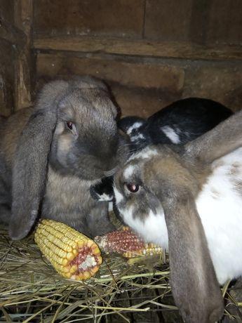 Продам мясо молодых кроликов (тушкой)