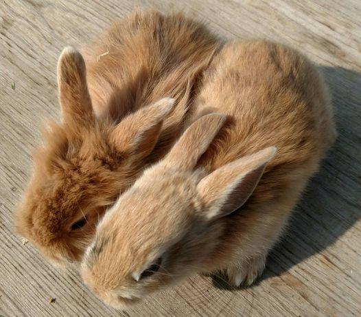 Цікаві Кроленята