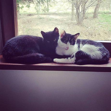 Dwa koty Salty i Pepper szukają domu!