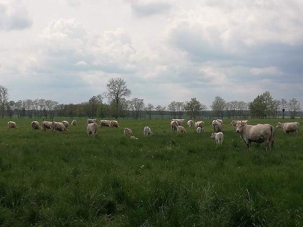Wydzierżawię gospodarstwo rolne