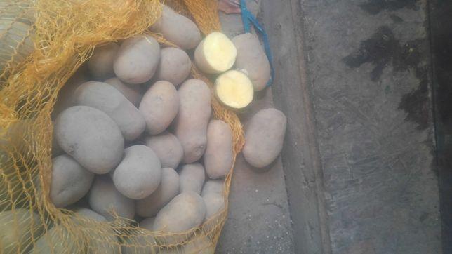 Sadzeniaki !!! Bio ziemniak