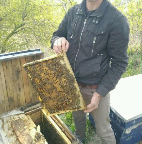 Бджоли, пчелы, пчелосемьи, пчелопакеты