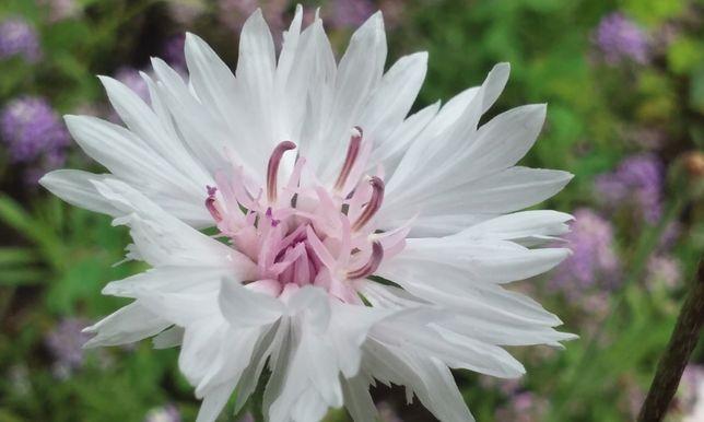 Zestaw 40 gatunków roślin leczniczych. Zielnik