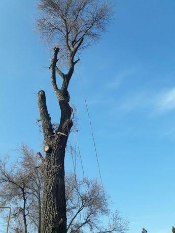 Спил деревьев альпинист