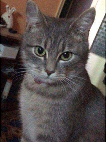 Пропала кошка 3-я Слободская