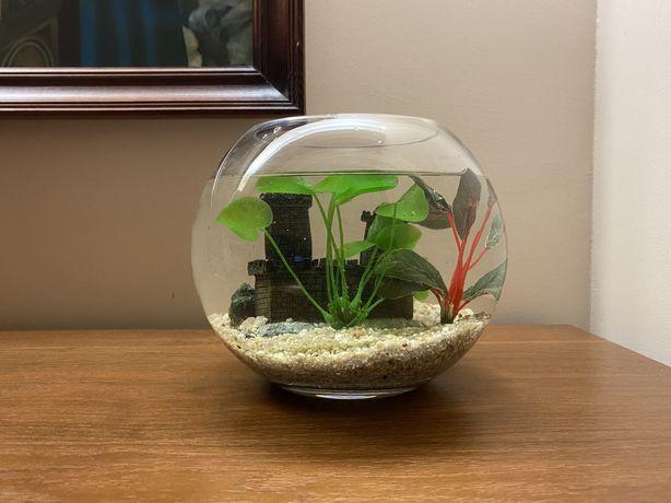 Akwarium okrągłe szklane + kamienie + 2 roślinki + zamek