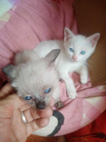 Doação gatinhos para pessoa responsável
