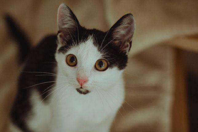 Suzi - kociak 4 miesięczny szuka domu