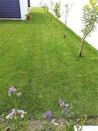 Limpo terrenos ervas árvores etc