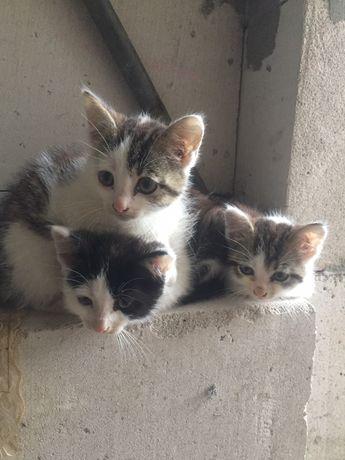 Віддам котиків в гарні руки