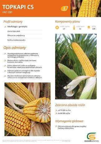 Nasiona kukurydzy - TOPKAPI CS Caussade - sprzedam