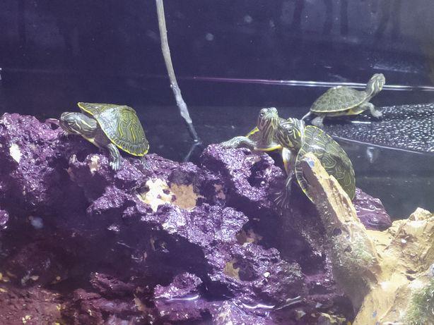 Pokarm dla Żółw wodno-lądowy sklep zoologiczny Pirania Olsztyn