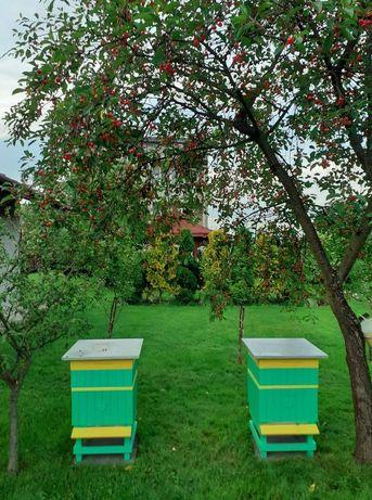 Pszczoły -odkłady.
