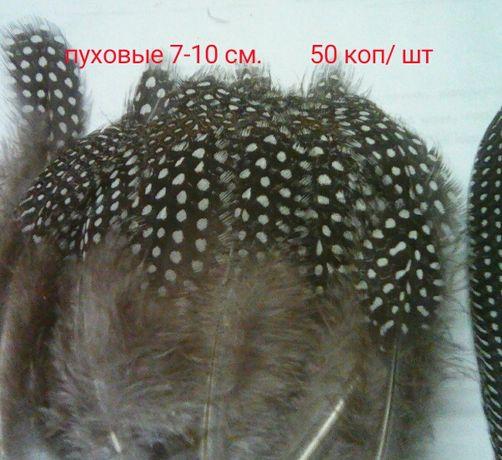 Продаю перья цесарки