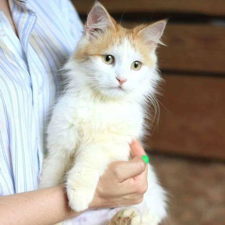 Малышка Флер ищет любящую семью, котенок , котята