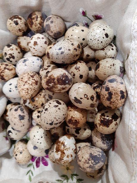 Продаю яйца перепелиные Первомайск - изображение 1