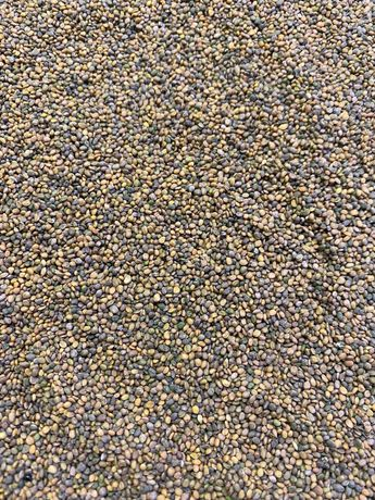 Семена для микрозелени:Горох,горчица,редис,свекла,руккола,базилик,лук