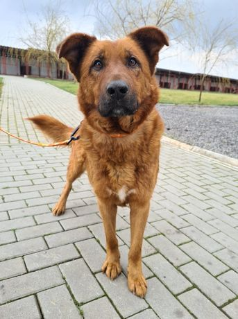 Mykanów/ Stary Broniszew znaleziono psa! Szukamy właściciela!
