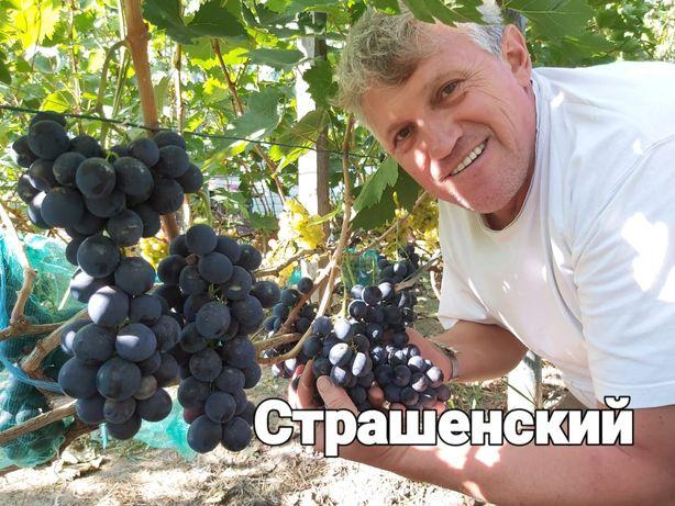 Саженцы винограда (разные сорта)