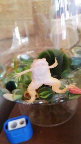 Продам лягушку шпорцевую белую СРОЧНО